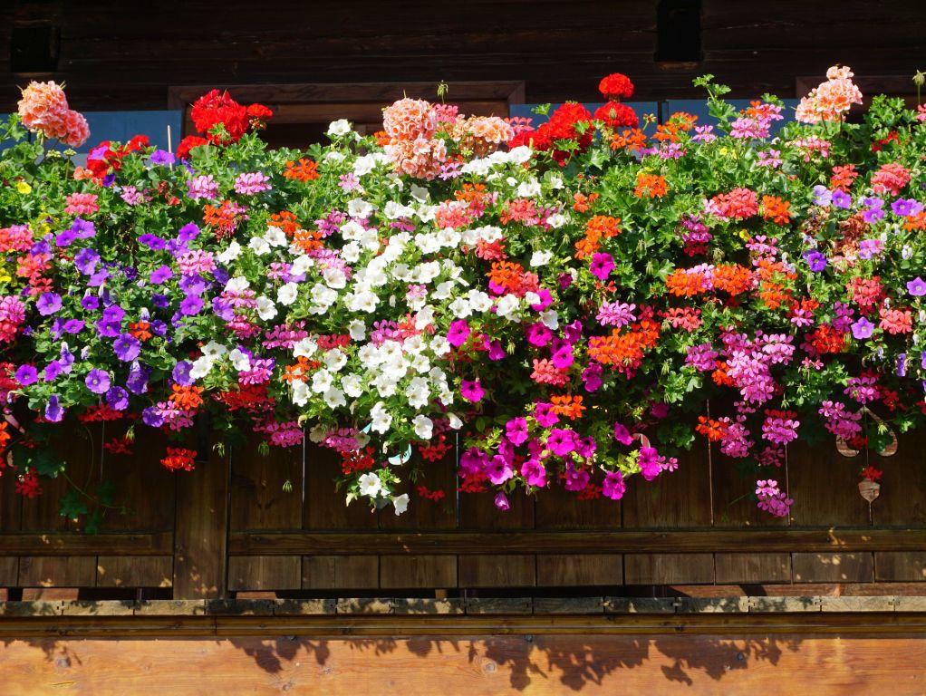 Gärtnerei Mählen weitere Angebote